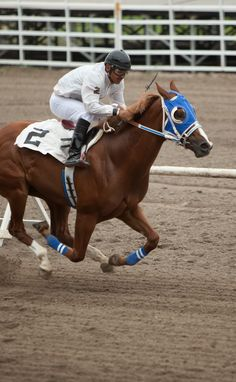 Horse Races 2012 | Eastern Idaho State Fair