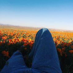 Imagem de flowers, sky, and orange