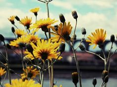 Flowers by the Riverside