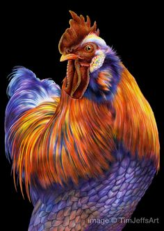 Rooster Colored Pencil Drawing by TimJeffsArt on Etsy