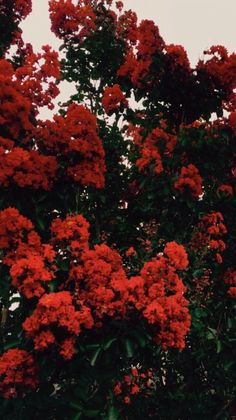 34 Ideas Wallpaper Red Flowers Pictures For 2019 Beautiful Flowers Wallpapers, Most Beautiful Flowers, Love Flowers, Bouquet Flowers, Vintage Flowers, Exotic Flowers, Beautiful Places, Beautiful Pictures, Wallpaper Tumblrs