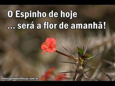 Carlinha Santana ♥♥ Amiga. - YouTube