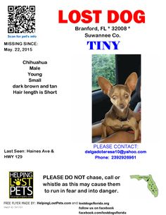 Lost Dog - Chihuahua - Branford, FL, United States