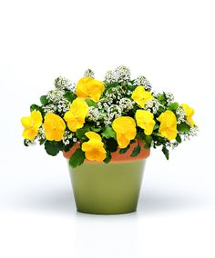 371 best mixed containers images on pinterest container flowers yellow pansies white alyssum mightylinksfo