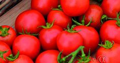 Tomaatti, Pensas-, Maskotka