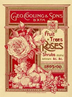 Geo Cooling & Sons Bath -- Fruit Trees, Rose and Shrubs -- Rose -- View By Flowe. Geo Cooling & So Éphémères Vintage, Images Vintage, Vintage Labels, Vintage Ephemera, Vintage Pictures, Vintage Paper, Vintage Postcards, Vintage Prints, Vintage Designs