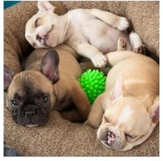Cute little puppies!!