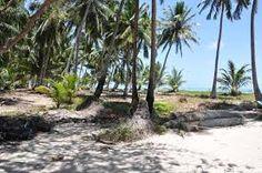Resultado de imagem para praia de maragogi fotos