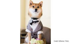 20 Animals That Make Millions for Their Owners