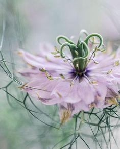 Flora, Congratulations, Blossoms, Pretty, Artist, Plants, Instagram, Flowers, Artists