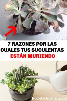 7 Reasons Why Your Succulents Are Dying – Cactus Gardening Courses, Gardening Tips, Suculentas Interior, Plante Carnivore, Fall Planters, Head Planters, House Plants Decor, Cactus Y Suculentas, Green Life