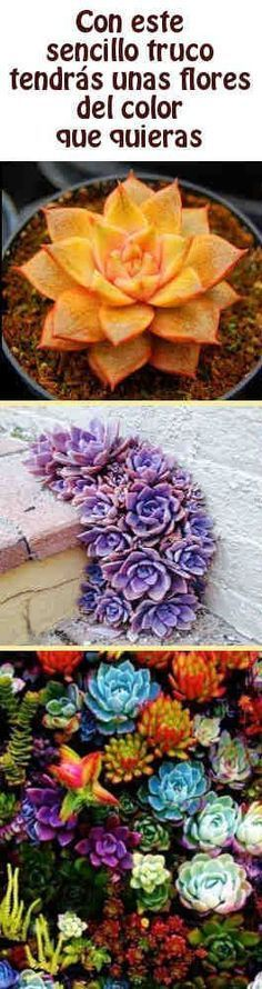 Con este sencillo truco tendrás unas flores del color que quieras #flores #colorados #jardineria