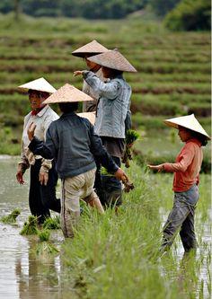 Laos daily life #daily