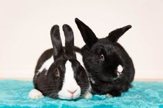 There are many ways that rabbits communicate