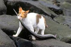 「猫 おもしろ」の画像検索結果