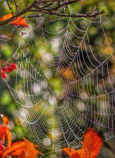 Wet cobweb on a misty morning.