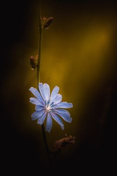 Photograph Beauty May Fade But The Light Never Will by Paul Barson on 500px