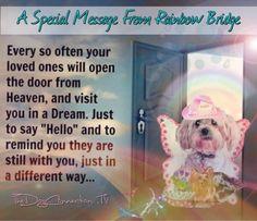 A special message from Rainbow Bridge Rainbow Bow, Rainbow Bridge, Dog Love, Puppy Love, Pet Loss Grief, Sending Prayers, I Love Gold, Pet Remembrance, Little Prayer