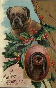 CHRISTMAS Mastiff or Boxer and Pekingese Type Dogs HOLLY c1910 Postcard