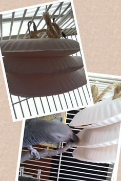 Paper plates? For a parrot? That's right! Find more fun parrot activities at https://www.facebook.com/PamperedParrot