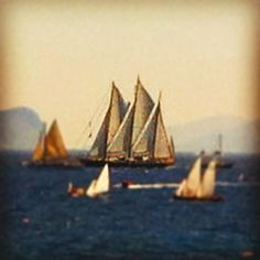 Regatta at Spetses island . Sailing Ships, Greece, Beautiful Pictures, Island, Places, Travel, Sailing Yachts, Greece Country, Viajes