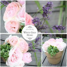 Friday Flower Lavendel