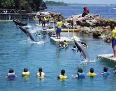 I would go to the Dolphin Cover in Jamaica because I have always wanted to go swimming with dolphins and sharks! Why in Jamaica? It is because I will be swimming with them in the ocean, which is their natural habitat instead of a pool.