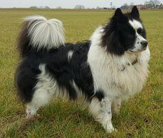 Hunde Foto: Angelika und Nikita vom schwarzem See - Mein Dickerchen Hier Dein Bild hochladen: http://ichliebehunde.com/hund-des-tages  #hund #hunde #hundebild #hundebilder #dog #dogs #dogfun  #dogpic #dogpictures