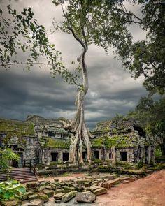 Cambodia, Ta Prohm Temple by michaeljohnson148 #SocialFoto