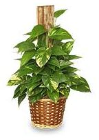 House Plant Care & Information