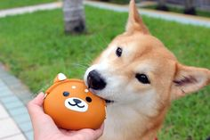 Kobe the Shiba Inu checking out our super cute silicone coin purse! #shibainu #coinpurse #doglovers #stockingstuffers #dotoly