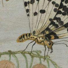 Insecten en vruchten, Jan van Kessel (I), ca. 1660 - ca. 1665 - Rijksmuseum