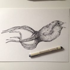 Octopus bird illustration ink   ©Alfred Basha