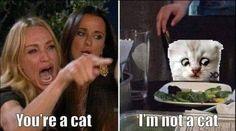 The Funny, Cats, Memes, Fun Stuff, Board, Fun Things, Gatos, Meme, Cat