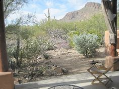 Beautiful+house+nestled+against+Tucson+Mt.+Park;+mt.+views+in+quiet,+scenic+area+++Vacation Rental in Arizona from @homeaway! #vacation #rental #travel #homeaway