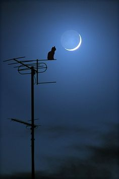 Cat on antenna with the moon out..