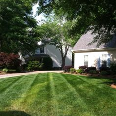 Learn how to #diagonal #stripealawn at http://ift.tt/269MU5s #lawnstripes #lawncare #landscaping #lawnbusinesscourse #beginnersguidetolawncare