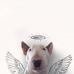 Bullterrier*angel