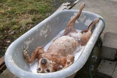 funny dog in bath