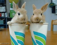 Bunnies in cups.