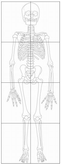 Printable Scale Drawing of a Child Skeleton puzzle Preschool Science, Teaching Science, Science For Kids, Science Activities, Science Projects, Life Science, Science And Nature, Teaching Resources, Art Projects