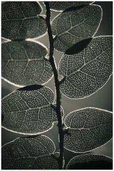 ...basked in light, Martin Ollman... http://techosapien.500px.com/latest/photo/1