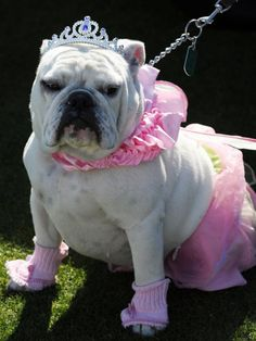 DIY Network shares some adorable Halloween costumes for dogs and cats.