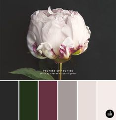 a peony-inspired color palette // slate gray, deep emerald green, sangria, taupe gray, blush pink petal wandfarbe taupe a peony-inspired color palette — Akula Kreative Green Colour Palette, Color Palate, Green Colors, Colours, Green Palette, Gold Colour, Room Color Schemes, Taupe Color Schemes, Design Seeds