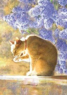 cat bathing in the light