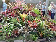 2006 Bromeliad Fiesta, Auckland by tanetahi, via Flickr
