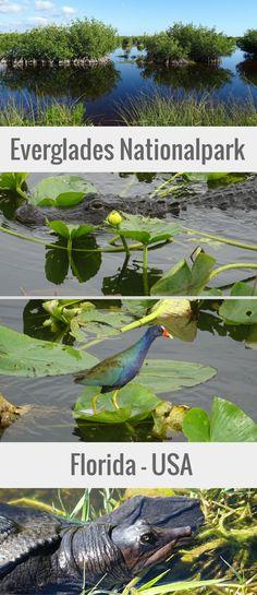 In diesem Reisebericht geben wir dir Tipps für deinen Besuch im Everglades Nationalpark in Florida auf eigene Faust! Entdecke beeindruckende Landschaft und jede Menge Alligatoren, Schildkröten, Vögel und mit etwas Glück sogar die knuffigen Seekühe.