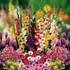 Florists Favorite garden - 200 flower bulbs buy online order now