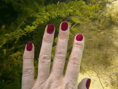 Black Cherry gel under water.  Even divers can have pretty nails. Http://tracydonaldson.jamberry.com