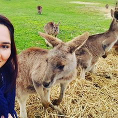 Life in Australia. Hanging out with my buddies lol. awesome, beautiful, instagram, selfie, social media, girl, travel, visit australia, kangaroos. Kena_cm_design